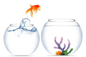 goldfish jumping to new bowl-iStock_000020130958XSmall