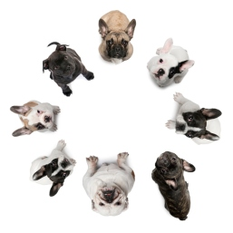 dogs sitting in a circle, looking up at the camera.